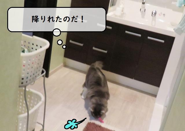 f:id:suzumesuzume:20191216161216j:plain