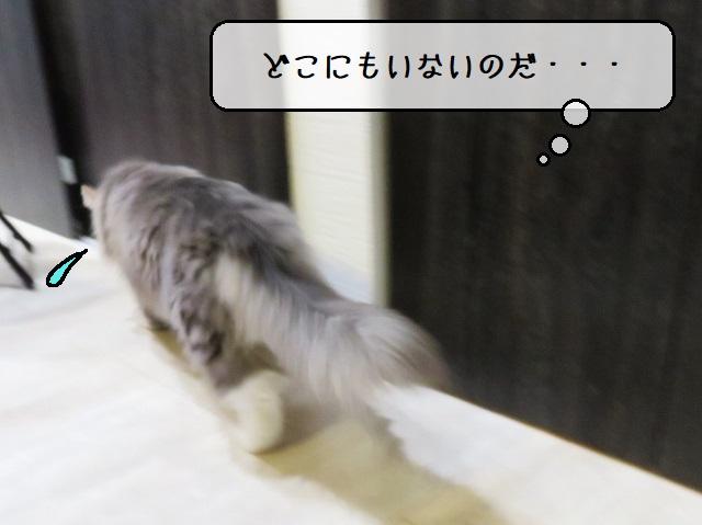 f:id:suzumesuzume:20191217154831j:plain