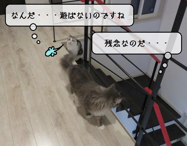 f:id:suzumesuzume:20191217195002j:plain