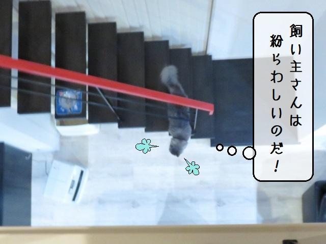 f:id:suzumesuzume:20191217195019j:plain
