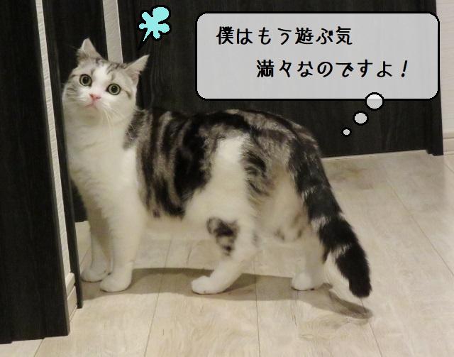 f:id:suzumesuzume:20191217195049j:plain