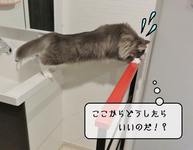 f:id:suzumesuzume:20191217205611j:plain