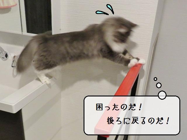f:id:suzumesuzume:20191217205618j:plain