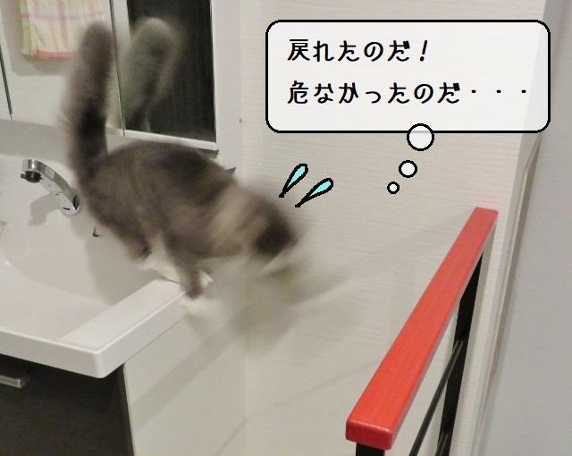 f:id:suzumesuzume:20191217205626j:plain