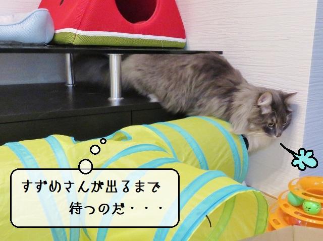 f:id:suzumesuzume:20191223161839j:plain