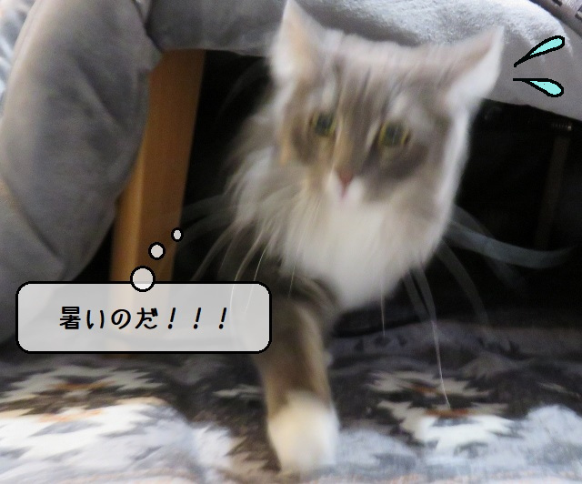 f:id:suzumesuzume:20191225141346j:plain