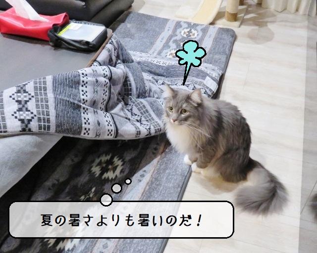 f:id:suzumesuzume:20191225141358j:plain