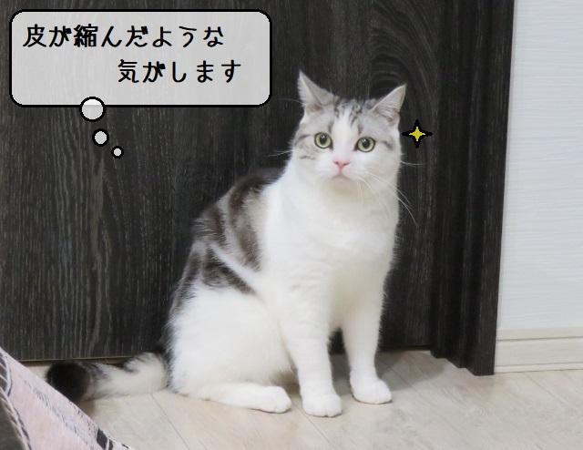 f:id:suzumesuzume:20191228201727j:plain