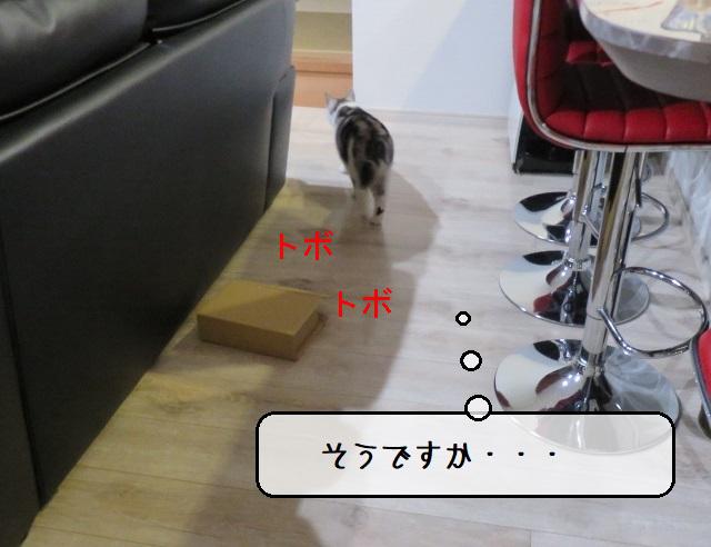 f:id:suzumesuzume:20201201193721j:plain
