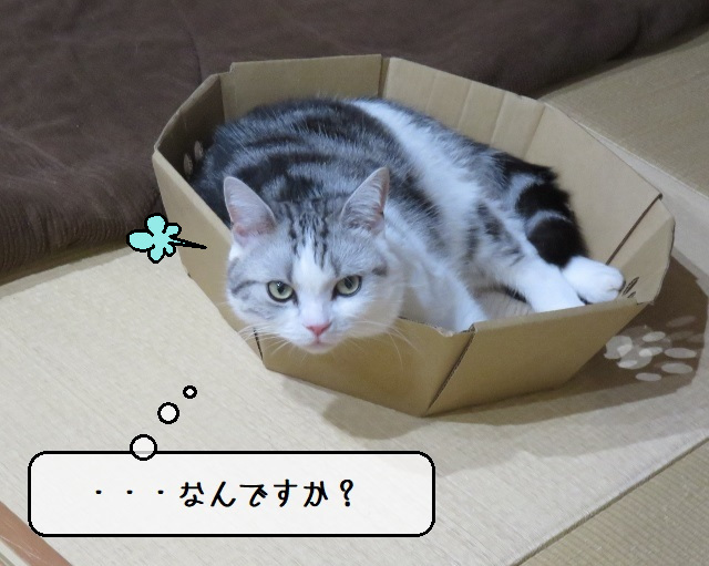 f:id:suzumesuzume:20201201193746j:plain