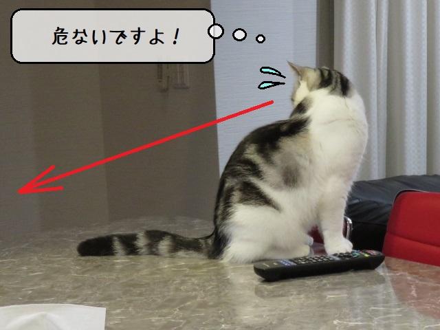 f:id:suzumesuzume:20210112150221j:plain