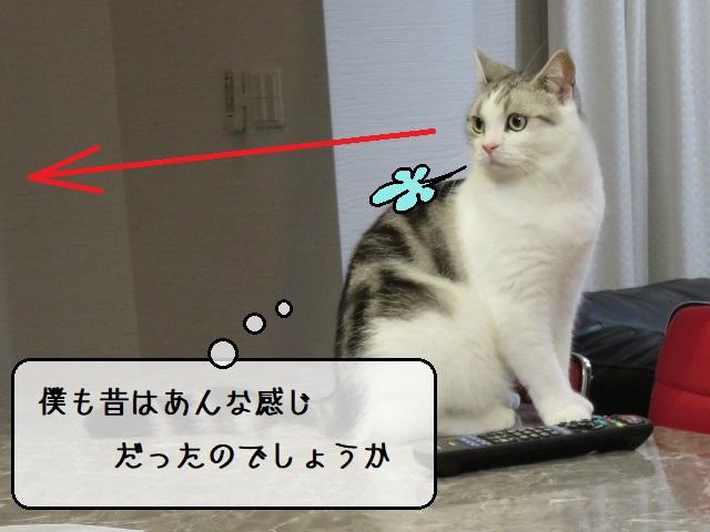 f:id:suzumesuzume:20210112150240j:plain