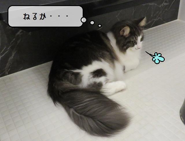 f:id:suzumesuzume:20210112195021j:plain