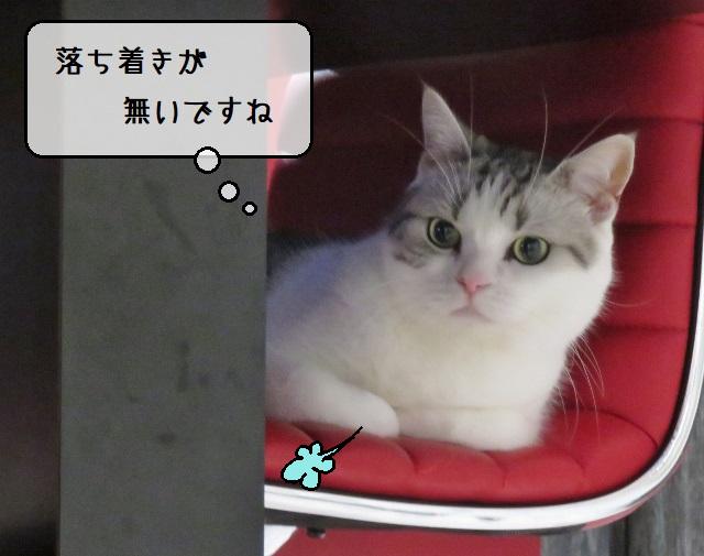 f:id:suzumesuzume:20210126143326j:plain