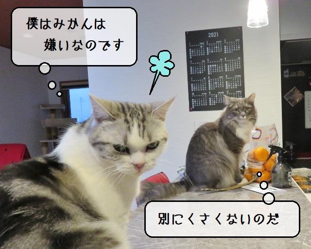 f:id:suzumesuzume:20210216145646j:plain
