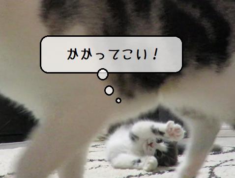 f:id:suzumesuzume:20210217133749p:plain