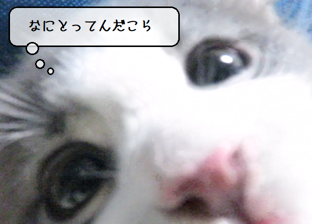 f:id:suzumesuzume:20210224150048p:plain