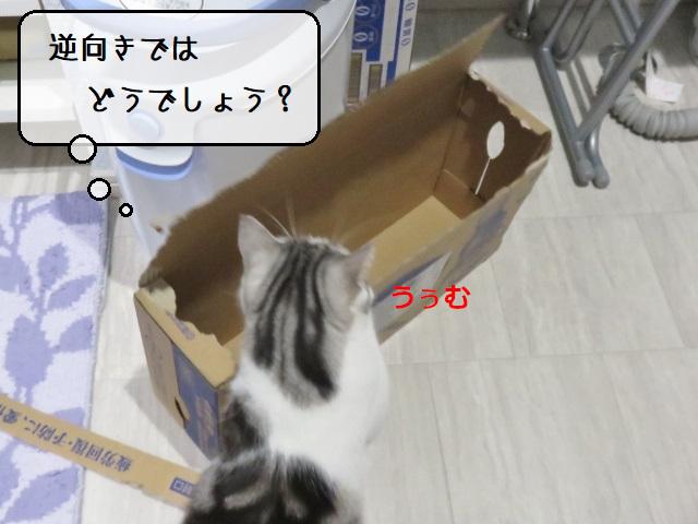 f:id:suzumesuzume:20210302154913j:plain