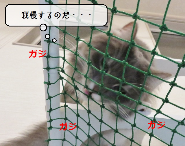 f:id:suzumesuzume:20210406142041j:plain