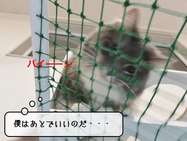 f:id:suzumesuzume:20210406142048j:plain