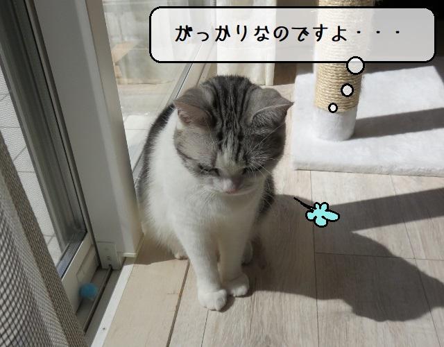 f:id:suzumesuzume:20210412144405j:plain