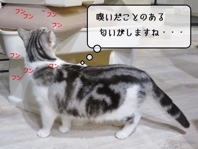 f:id:suzumesuzume:20210413200140j:plain