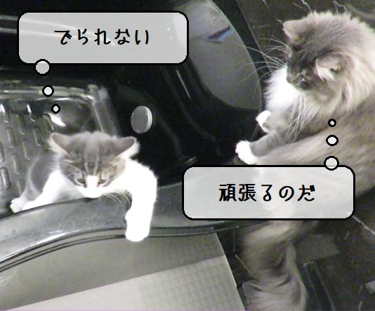 f:id:suzumesuzume:20210415150620p:plain
