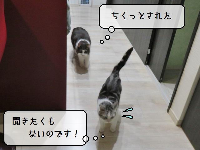 f:id:suzumesuzume:20210420202637j:plain