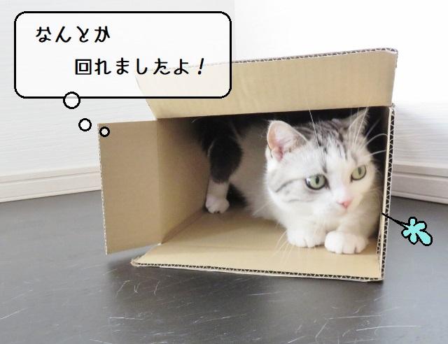 f:id:suzumesuzume:20210427151010j:plain