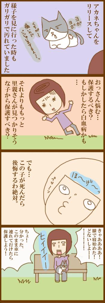 f:id:suzuokayu:20201210144845j:plain