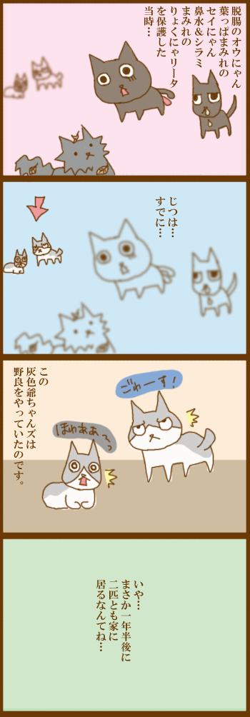 f:id:suzuokayu:20210319090115j:plain