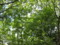 〔木〕夏の木々