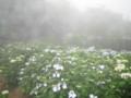 〔その他〕北苗畑 神戸市立森林植物園