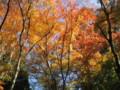 〔その他〕有馬 鼓ケ滝公園の紅葉