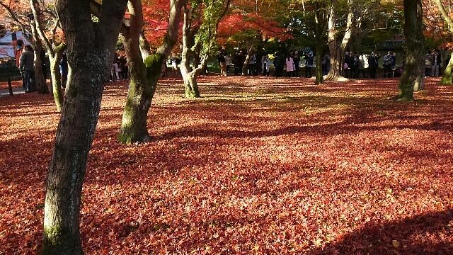 f:id:suzutakahiro1122:20161127173952j:image