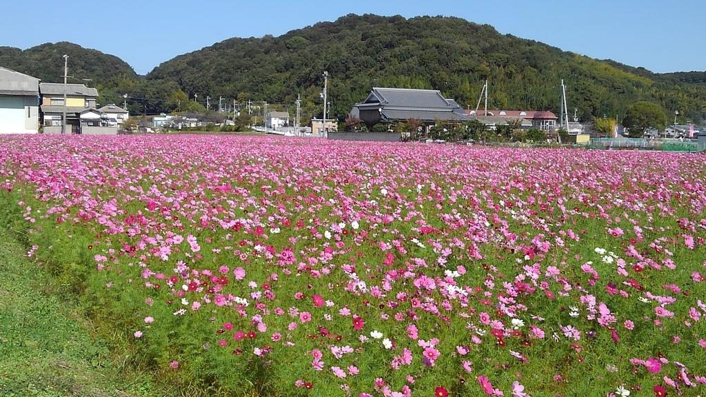 f:id:suzutakahiro1122:20181022220753j:plain