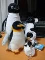 ペンギン(・Θ・)
