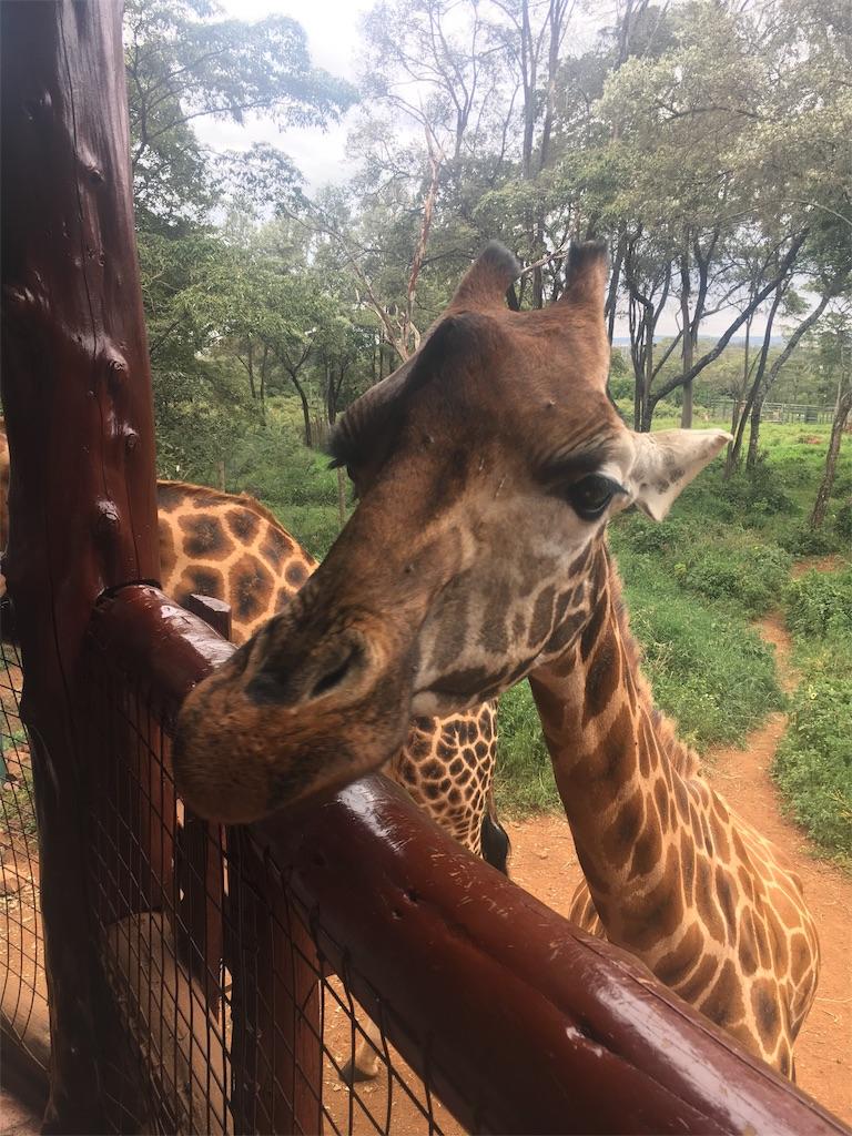 f:id:swahilimusume:20190708003339j:image