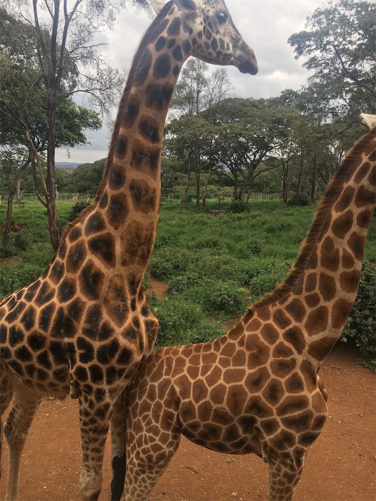 f:id:swahilimusume:20190708003355j:image