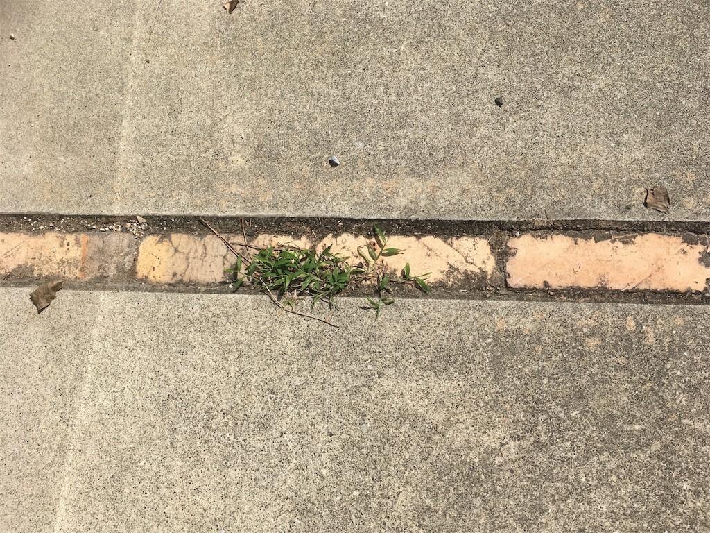 固まる土 駐車場目地 草