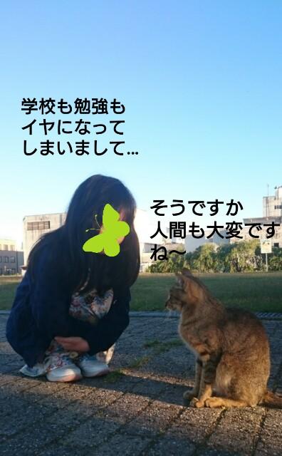 f:id:sweet527:20170617223605j:image