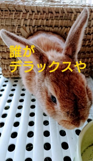 f:id:sweet527:20190608111734j:image