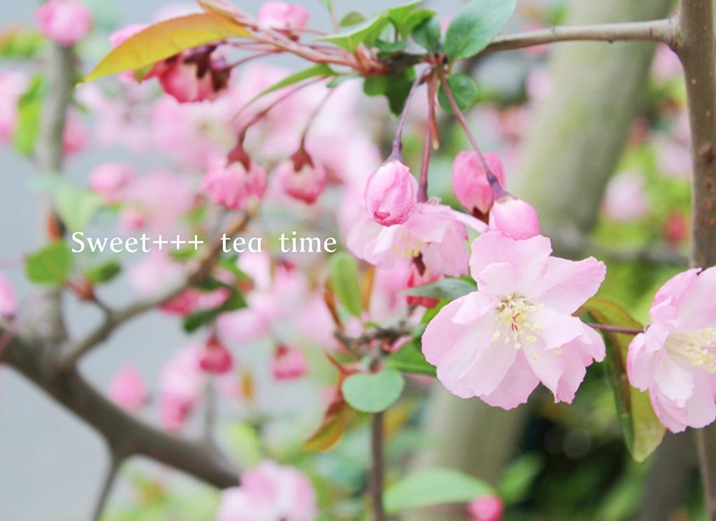 f:id:sweeteatime:20160419194349j:plain