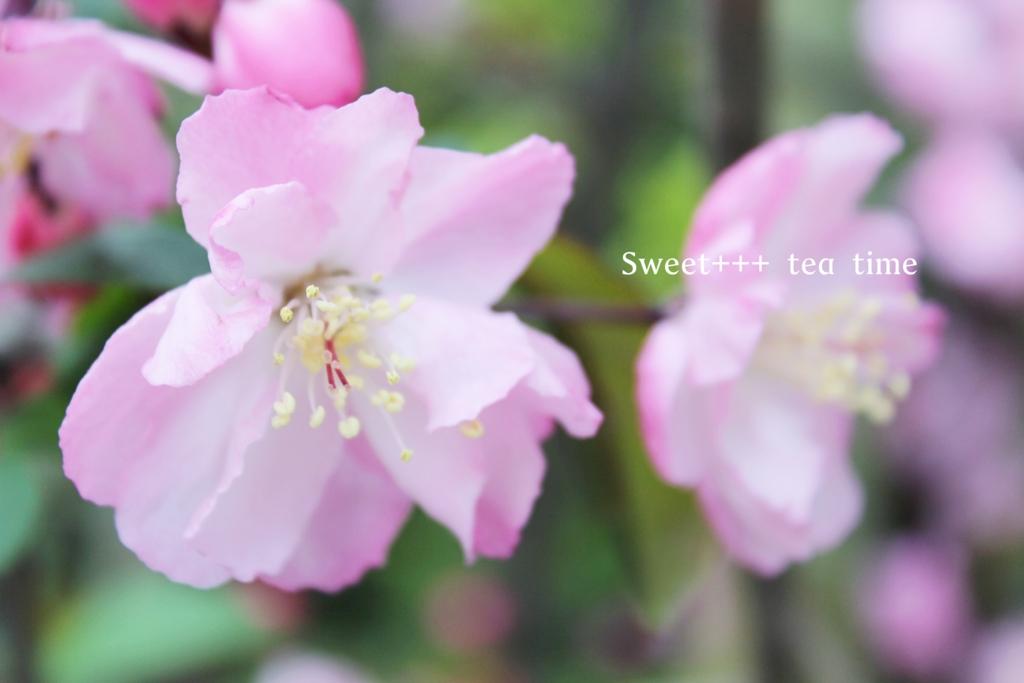 f:id:sweeteatime:20160419194410j:plain