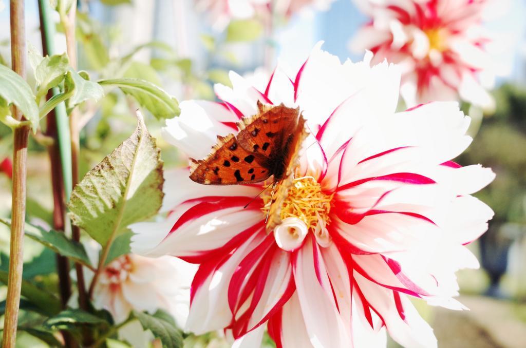蝶がとまった花の写真