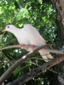 Turret bird?