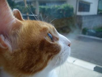 f:id:sweetmeloncat:20100901084733j:image