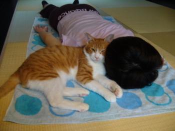 f:id:sweetmeloncat:20100923131011j:image