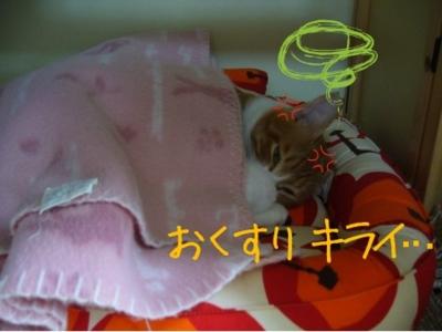 f:id:sweetmeloncat:20100925190354j:image
