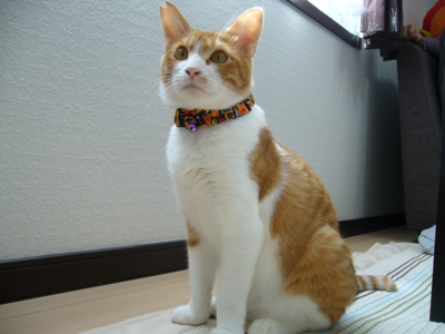 f:id:sweetmeloncat:20100926102908j:image